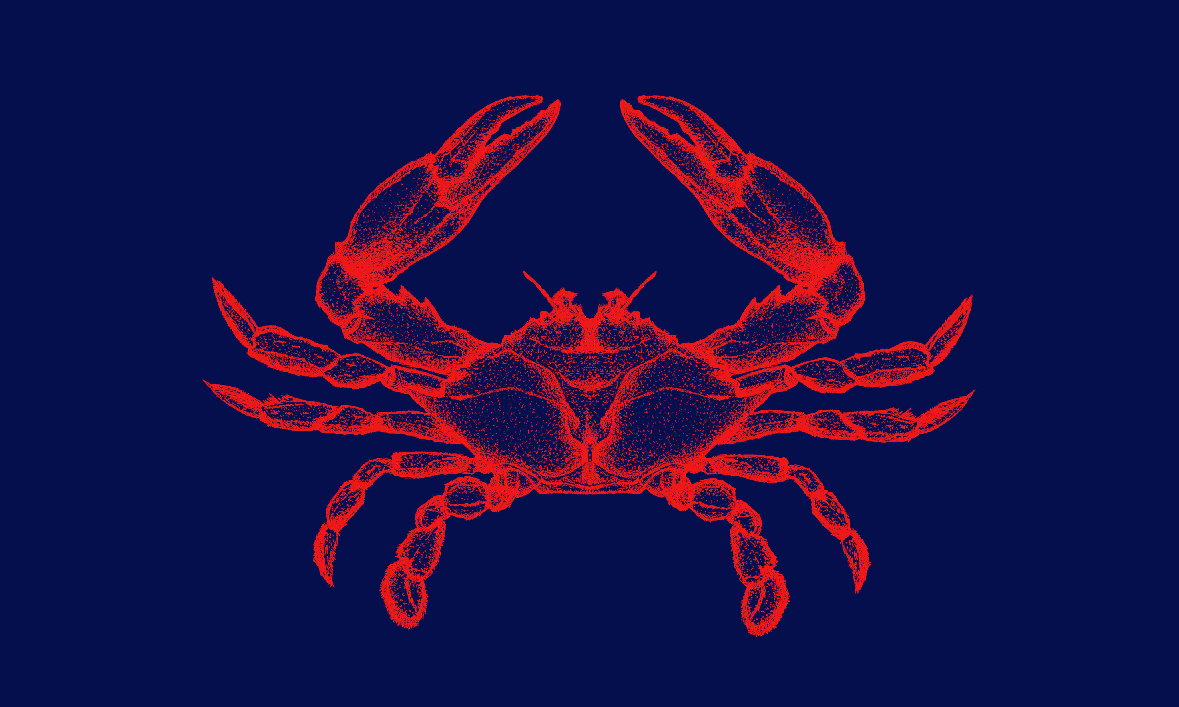 Otero Crab Meat // Crab Drawing